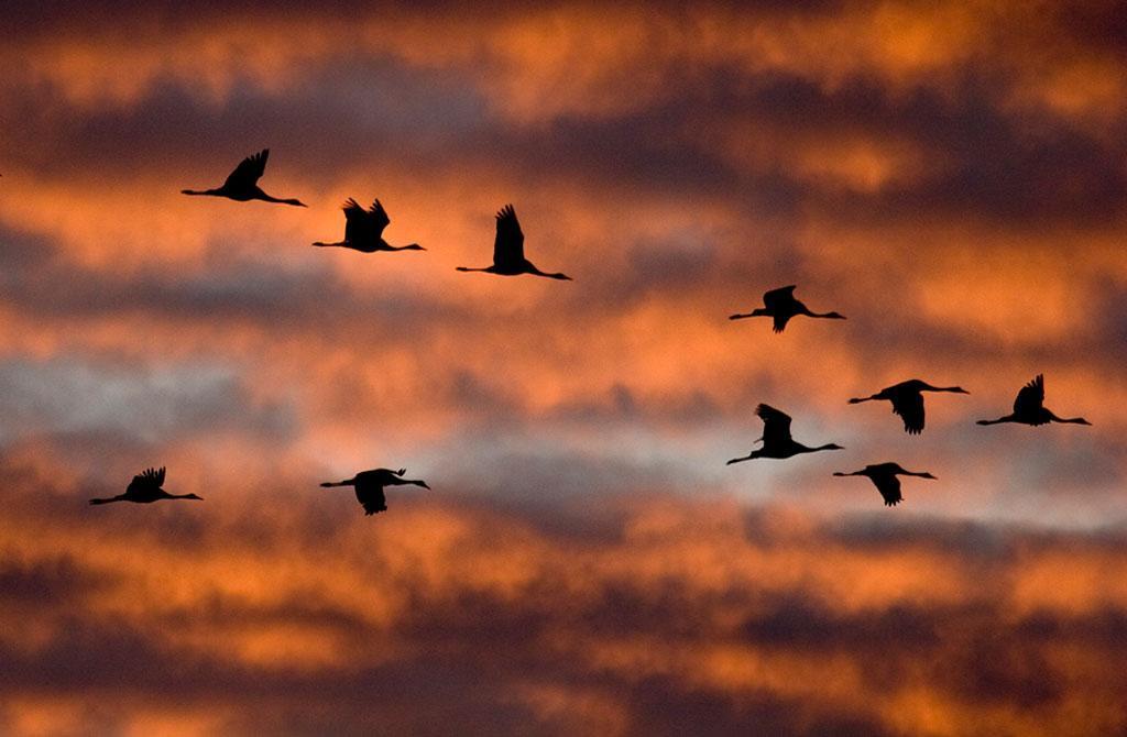 Птицы Париккала